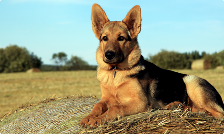 Storage Mites – A Common Cause Of Skin Allergies In Dogs